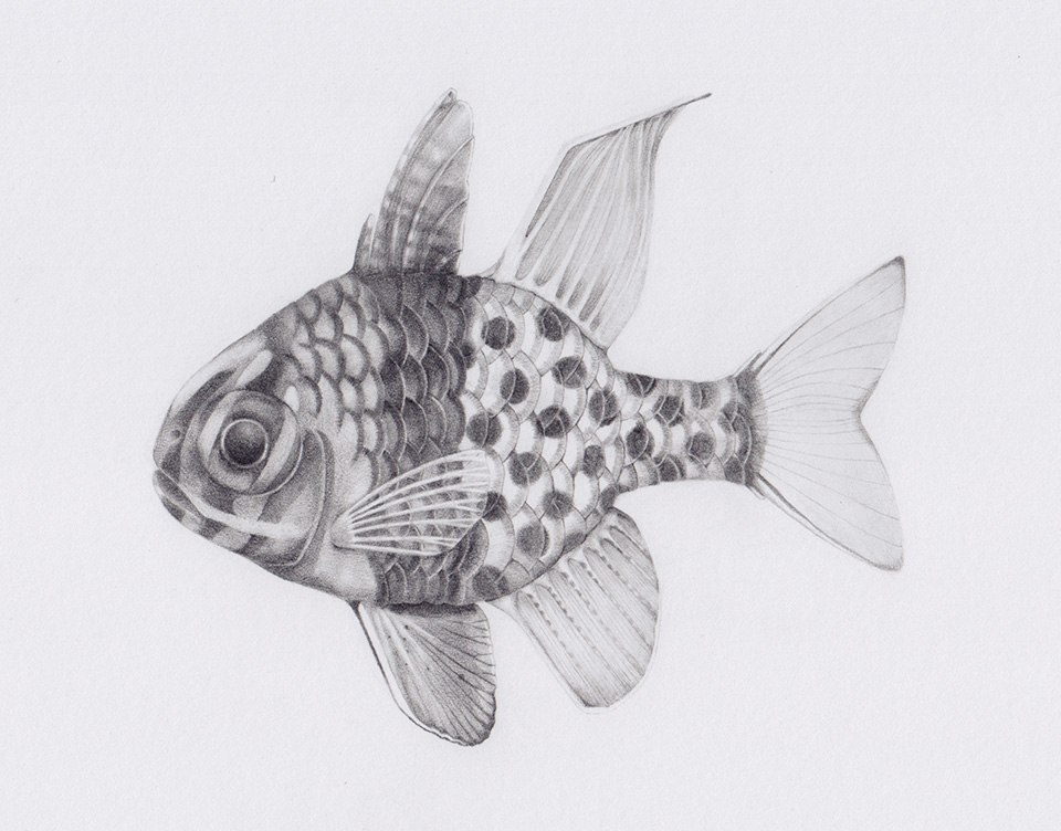 sunfish-960x752